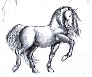 cheval_01